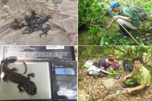Ghi nhận chủng nấm gây bệnh Chytridiomycosis trên các quần thể cá có ở Việt Nam