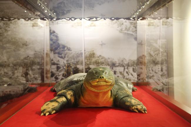 Lễ bàn giao mẫu vật Rùa Hồ Gươm